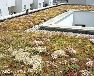 Acrotères avec toit végétaliser